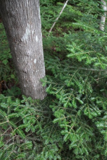 Pleasant Pine Pattern