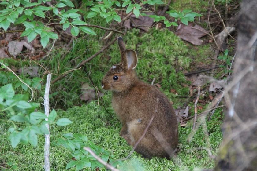 Rabbit having lunch