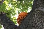 Orange Tree Fungi