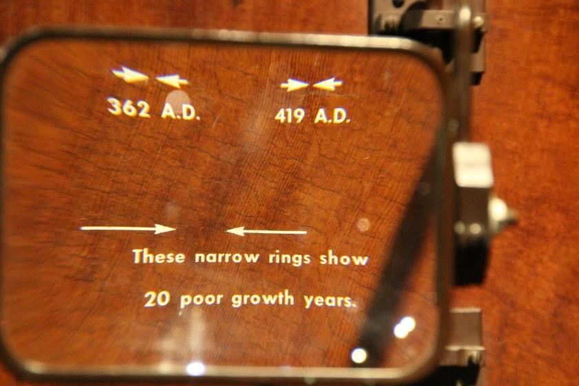 Ancient Sequoia Tree Rings