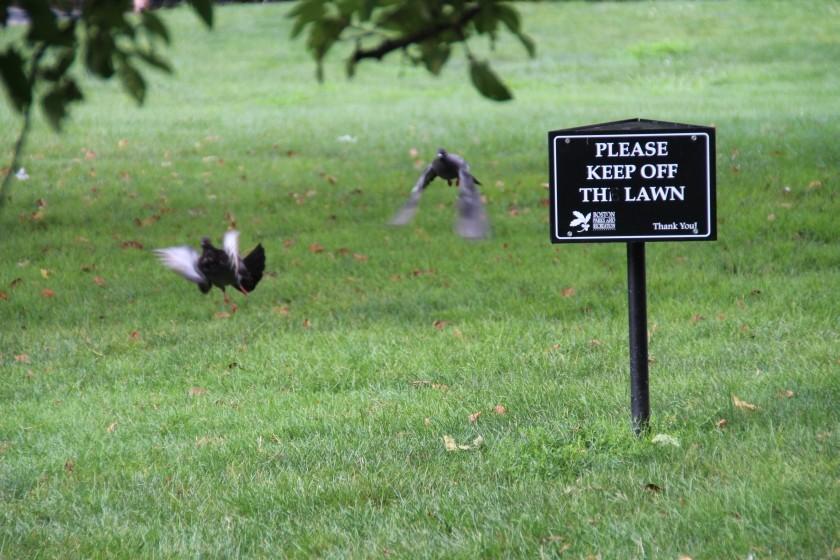 Pigeon Rebels