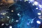 Great Ocean Tank