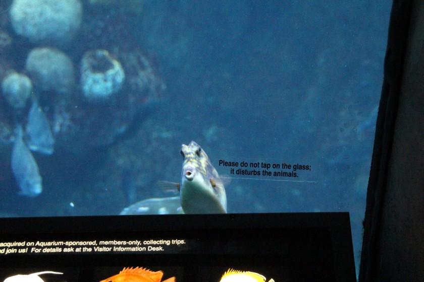 Non-disturbed Fish