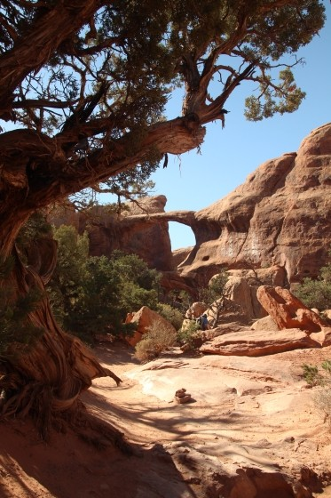 Sierra Juniper and Double O Arch