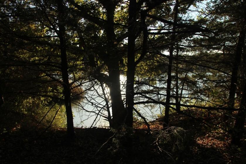 Lake-side tree