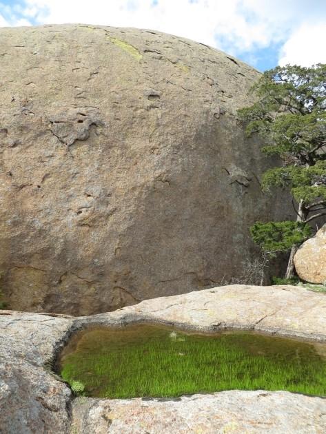 Boulder and Pond Grass