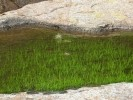 Pond Grass and Cactus