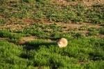 Prairie Dog and Prairie Verbena
