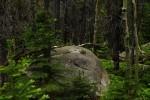 RMNP Lichen on Boulder