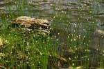 RMNP Lake Grass