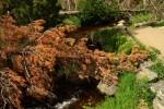 RMNP Sprague Lake Fallen Pine