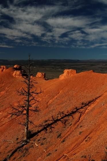 Tree in Red Canyon Utah