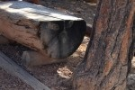 Bryce Canyon NP Bench Face