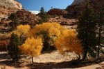 Zion NP Fall Colors